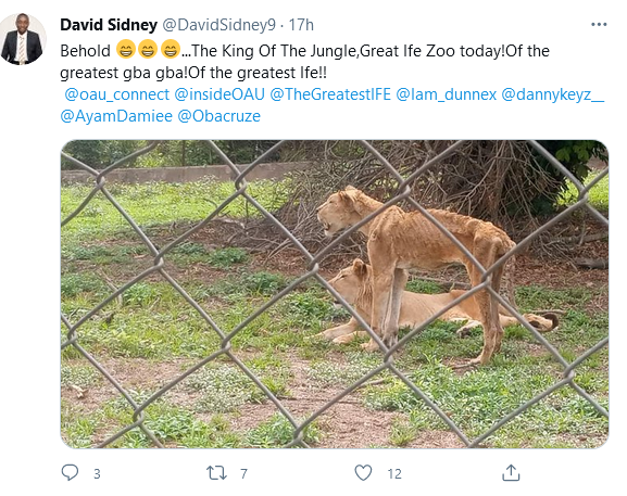 Malnourished and starved lions spotted at OAU and UI zoos