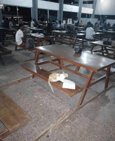 Cat Found Reading Amidst OAU Students